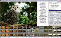 RecoverPlus Photo Recovery 2.5.495